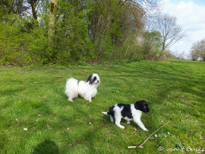 Loeke maakt kennis met andere honden