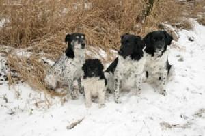 Februari 2010: onze vier kanjers