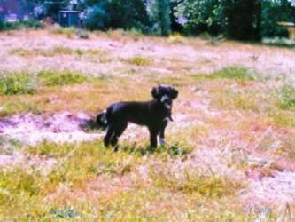 sascha-een-half-jaar-oud