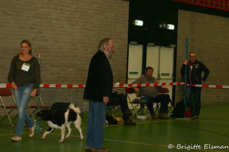 Keurmeester Andringa bekijkt eerst de honden als ze in de ring achter elkaar aan lopen