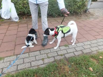 Djurre ontmoet een andere hond