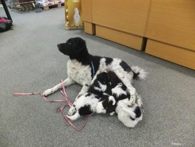 De drie vertrekkende pups worden nog even gevoed