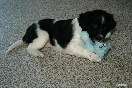 Pongo was helemaal idolaat van zijn knuffeltje