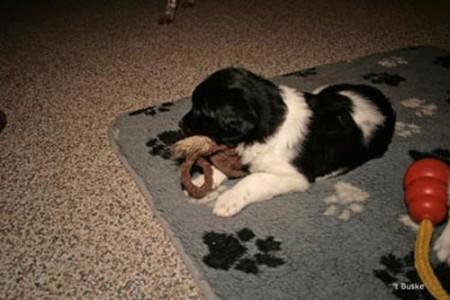 Pongo met speeltje