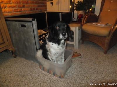 Kistje voor de pupjes, kistje voor Floran. Als ze het kon ging ze er in liggen...