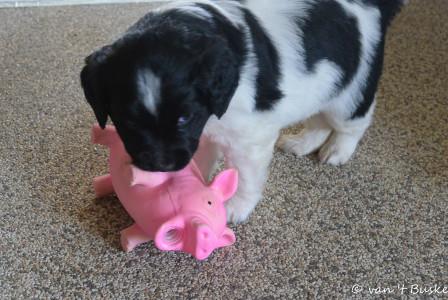 Een mooi cadeautje van een pupkoper. Het wordt gewaardeerd door de pupjes!