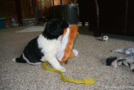 Hij speelt graag met de knuffeltjes