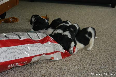 De zak is leeg maar ruikt nog heel lekker