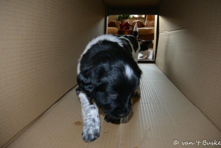 Rivan gaat als eerste door de doos die als tunnel dienst doet
