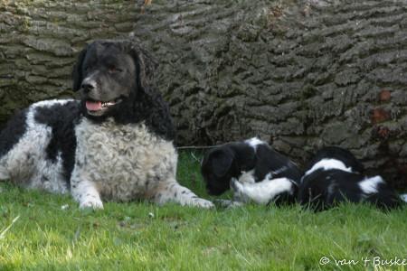 Guusje is buiten heel lief voor de pups, in huis wil ze wel eens iets te onbenullig zijn