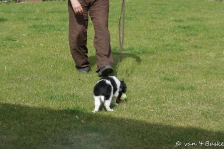 Het speeltje zit aan een touw zodat de pup geen succes heeft