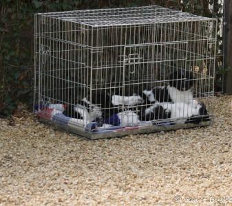 Vanwege de warmte hebben we de pups uit de auto gehaald, waarvan de deuren wel open stonden maar het toch veel te warm werd en in de schaduw gezet