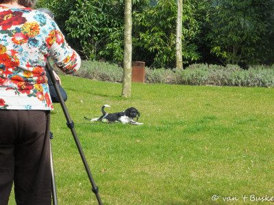 De verrichtingen van de pup wordt gefilmd