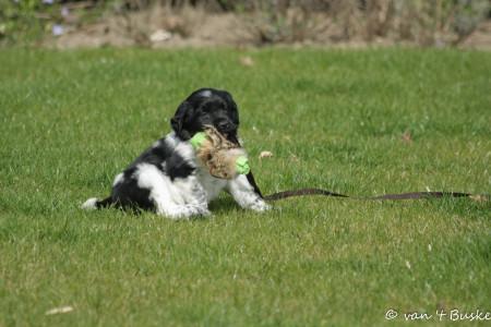 puppytest 30 maart 2014-9
