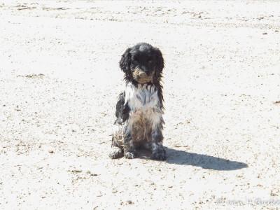 Rivan als jong hondje in Lathum