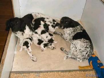 De pups boffen met hun twee moeders
