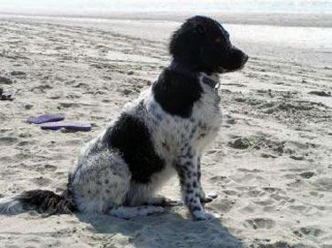 30 juni 2006 Op het strand