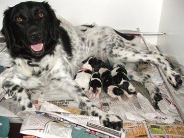 Aske met haar pupjes