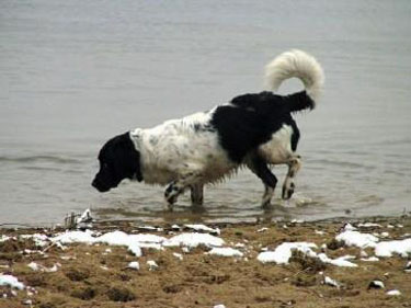 DJ struint langs het water op de Nevelhorst