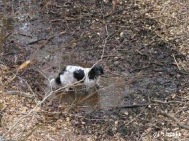 Fenna vermaakt zich best in de modderpoel