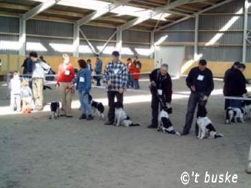 5 honden op rij