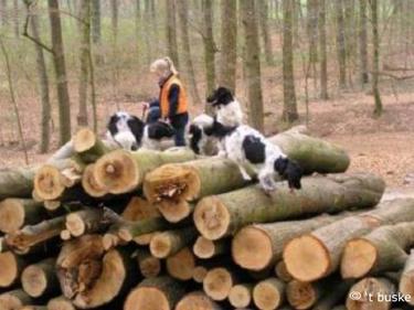 Lekker klauteren over de boomstammen