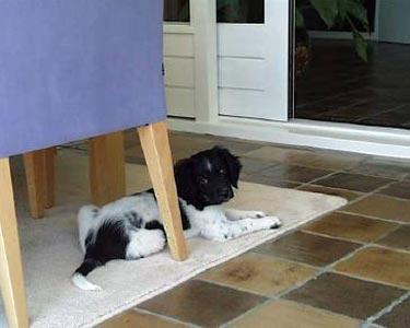 Op het kleed onder de tafel