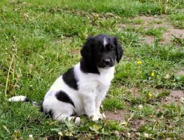 Klein hondje in een grote wereld