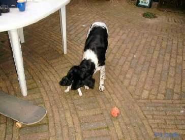 Het pupje liep iets te ver weg volgens Floran. Ze haalt hem heel netjes terug