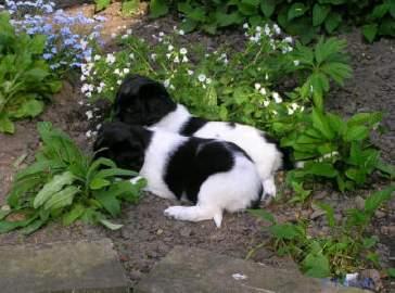 Fenna en Sil tussen de plantjes