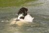 doutsen-zwemt